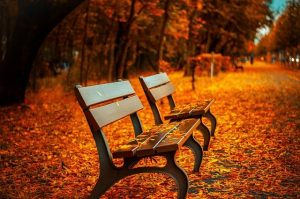 Beautiful parks and autumn atmosphere is a reason why you should visit Roseland this fall.